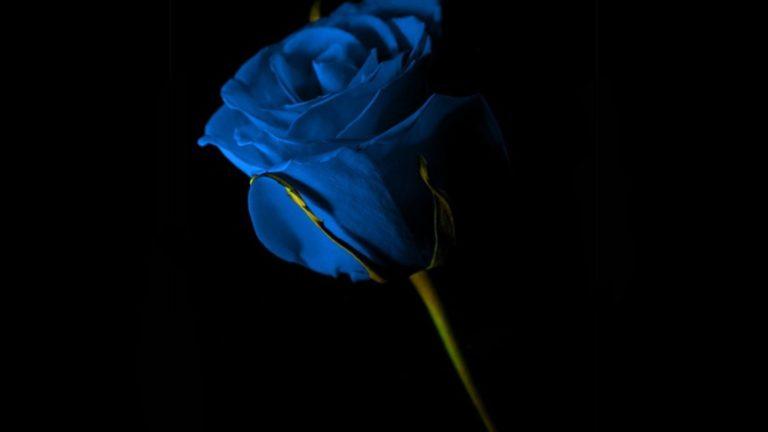 Blue And Black Wallpaper 46 1920x1080 768x432