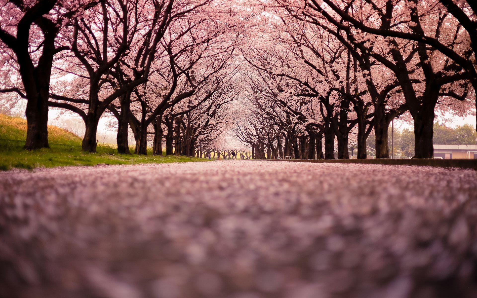 страны архитектура природа деревья ночь  № 3717000 без смс