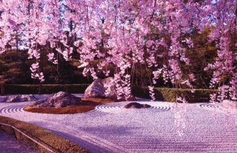 Cherry Blossom Tree Wallpaper 08 1920x1080 340x220