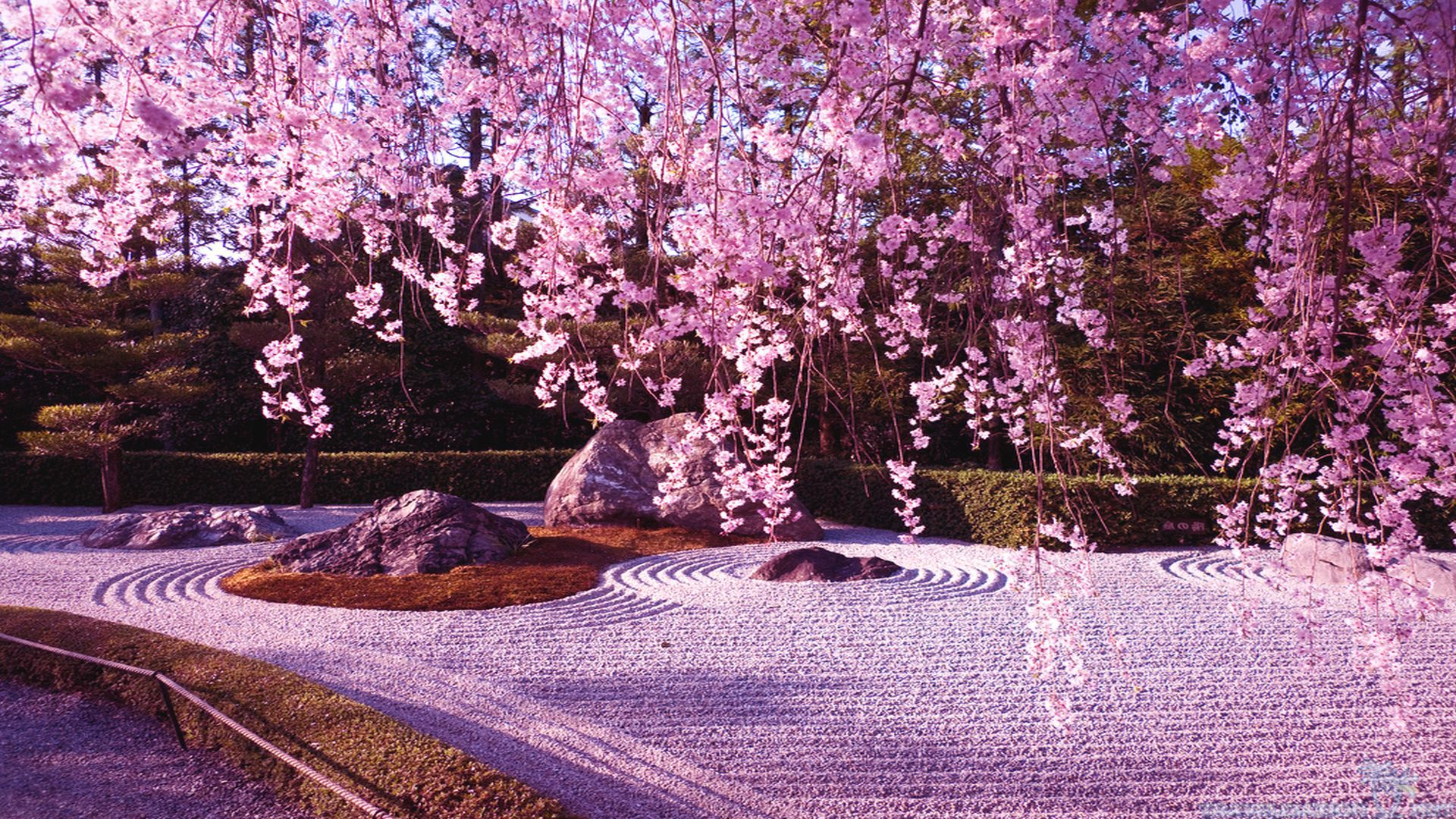 Cherry Blossom Tree Wallpaper 08