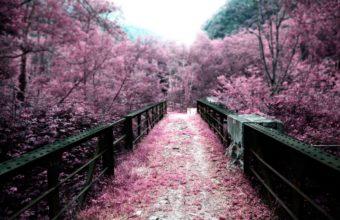Cherry Blossom Tree Wallpaper 12 2560x1600 340x220