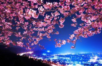 Cherry Blossom Tree Wallpaper 16 1920x1200 340x220