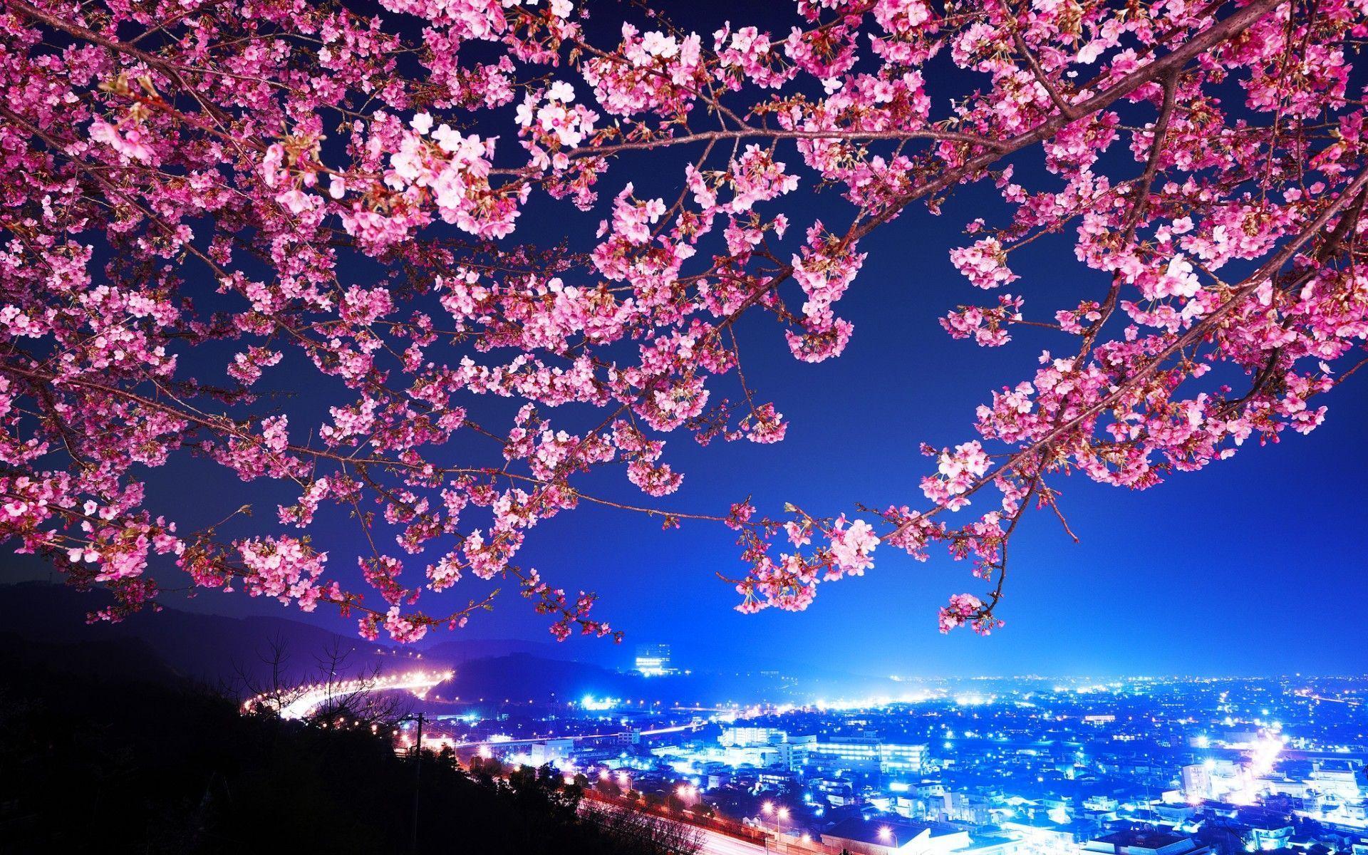Japanese Cherry Blossom Wallpaper Home