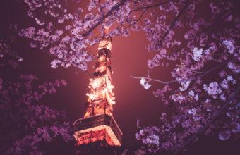 Cherry Blossom Tree Wallpaper 20 1920x1200 340x220