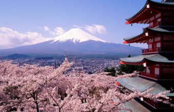 Cherry Blossom Tree Wallpaper 24 1024x768 340x220