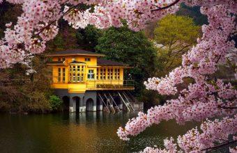 Cherry Blossom Tree Wallpaper 38 1920x1080 340x220