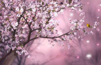 Cherry Blossom Tree Wallpaper 44 1920x1080 340x220