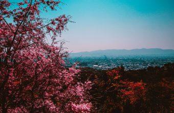 Cherry Blossom Tree Wallpaper 47 3456x2304 340x220