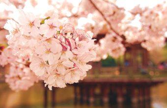 Cherry Blossom Tree Wallpaper 48 1920x1079 340x220