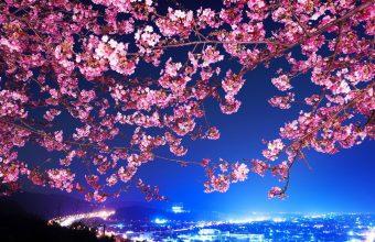 Cherry Blossom Tree Wallpaper 50 1920x1080 340x220