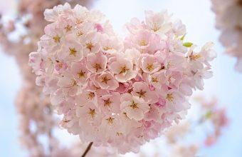 Cherry Blossom Tree Wallpaper 64 5815x3882 340x220