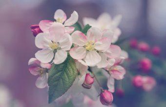 Cherry Blossom Tree Wallpaper 75 4704x3136 340x220