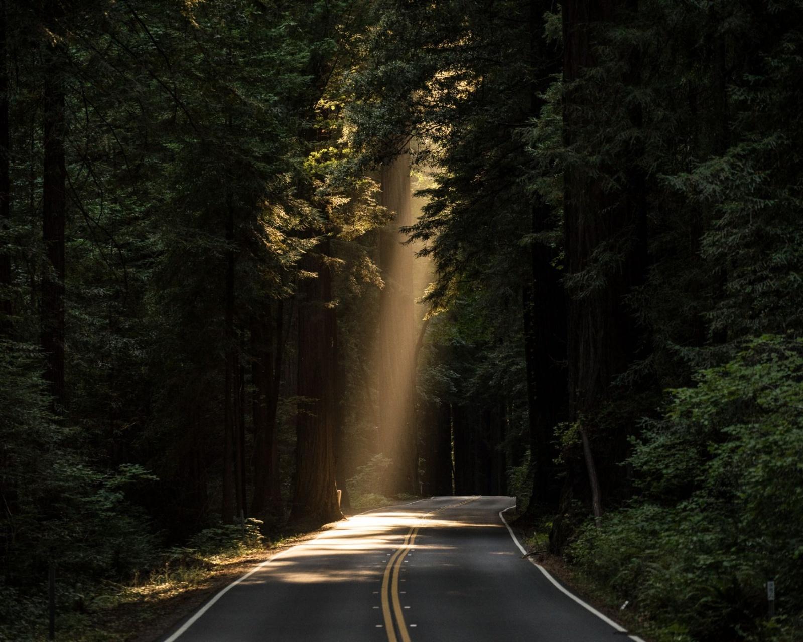 Conifer Daylight Evergreen Forest Highway Wallpaper