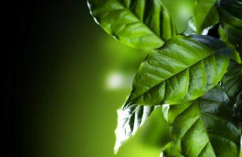 Emons Foliage Green Nature Wallpaper 1600x1280 340x220