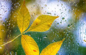 Glass Drops Leaves Autumn Bokeh Wallpaper 1600x1280 340x220