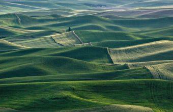 Mountain Forest Landscape Fog Field Grass Wallpaper 1600x1280 340x220