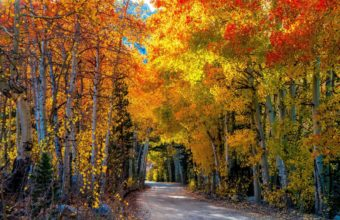 Roads Autumn Forests Trees Wallpaper 1600x1280 340x220
