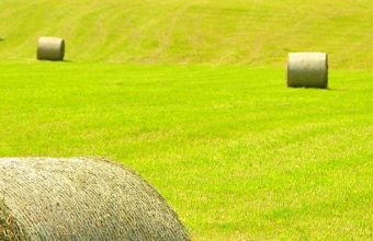 Austria Field Hay House Landscape 1080x2220 340x220