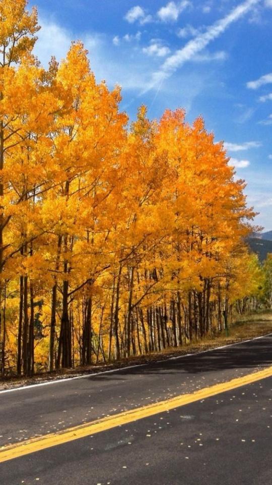 Autumn Road Trees Nature
