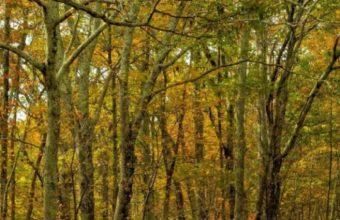 Autumn Trees Road Landscape 540x960 340x220