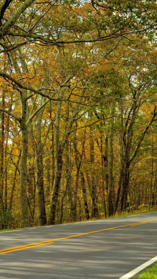 Autumn Trees Road Landscape 540x960