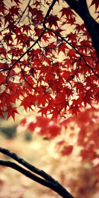 Autumn Wood Forest 720x1440 380x760