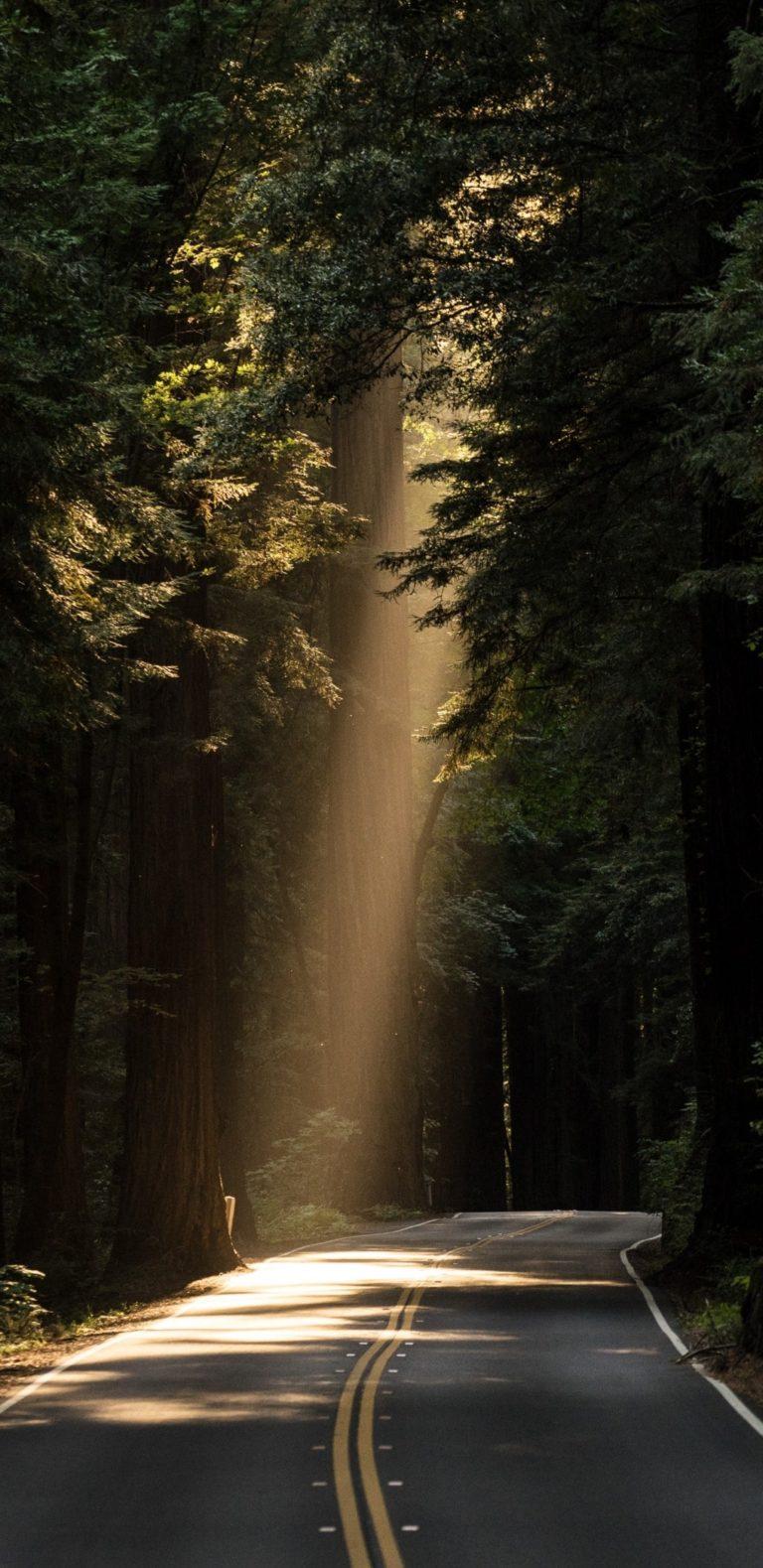 Conifer Daylight Evergreen Forest Highway 1080x2220 768x1579