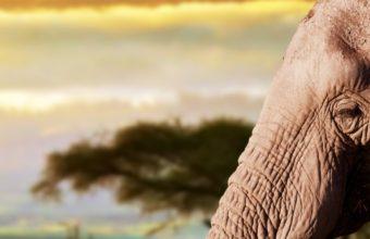 Elephant Animals 1080x2220 340x220