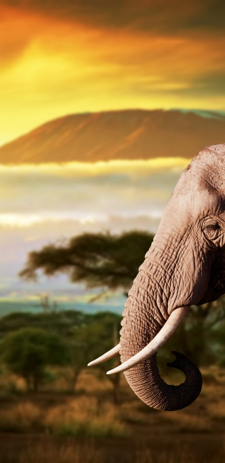 Elephant Animals 1080x2220 768x1579