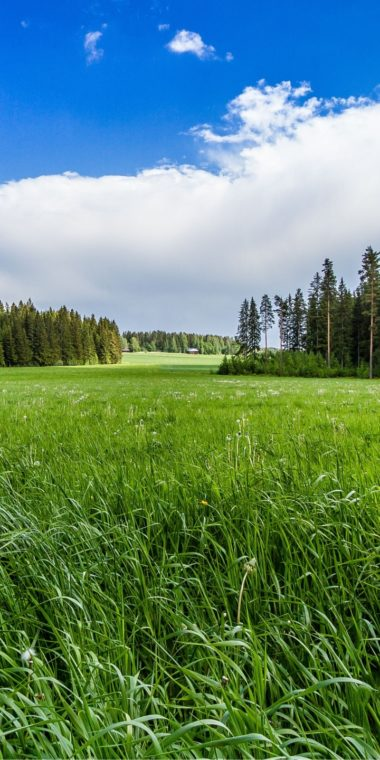 Field Grass Forest Trees Sky Landscape 720x1440 380x760