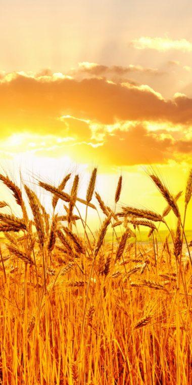 Fields Sunrises 720x1440 380x760