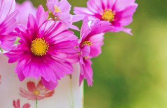 Flowers Garden 720x1440 340x220