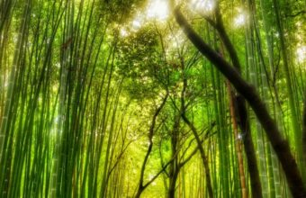 Forest Bamboo Path Trey Ratcliff 720x1440 340x220