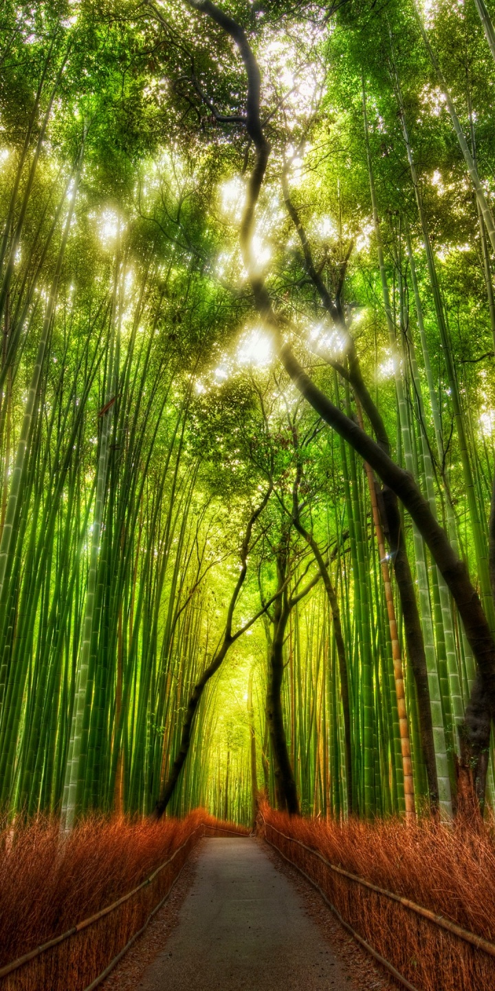Forest Bamboo Path Trey Ratcliff 720x1440