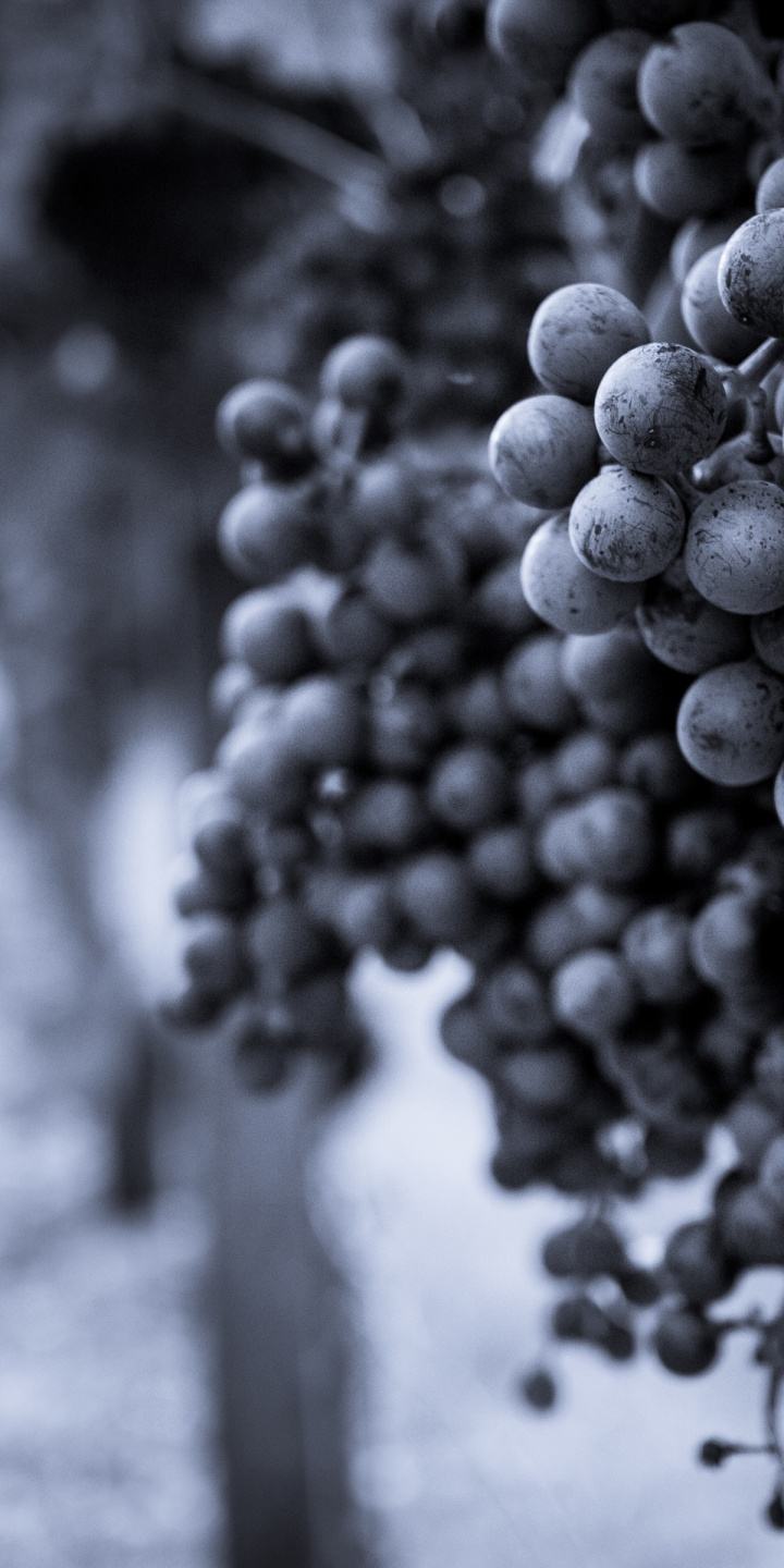 Grapes Fruit Monochrome B W 720x1440
