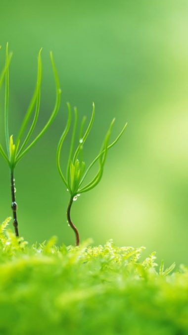 Green Nature Plants Macro 540x960 380x676
