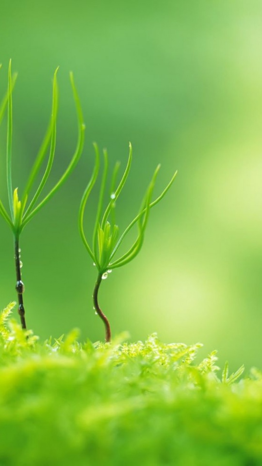 Green Nature Plants Macro 540x960