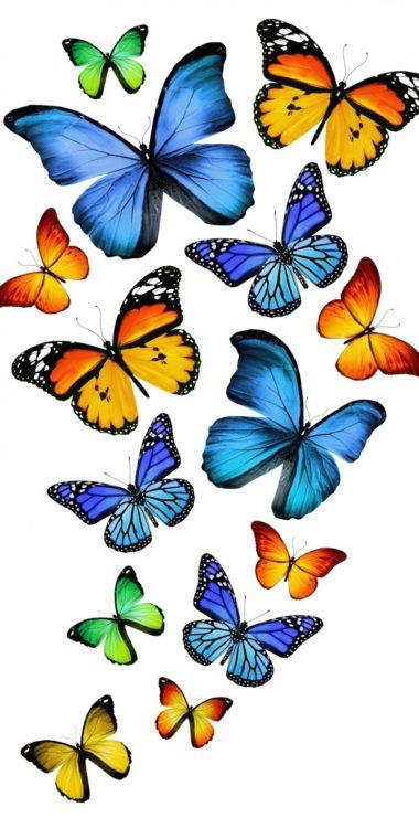 Insects Butterflies Animals Butterfly Bokeh Z 720x1440 380x760