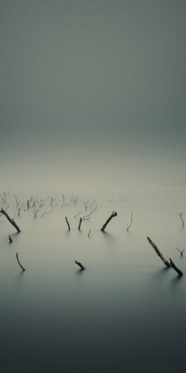 Lake Sticks Branches 720x1440 380x760