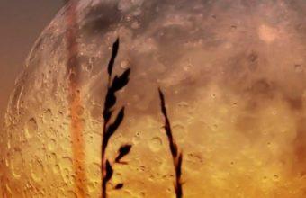 Moon Zoom Landscapes Plants Sunset 720x1440 340x220