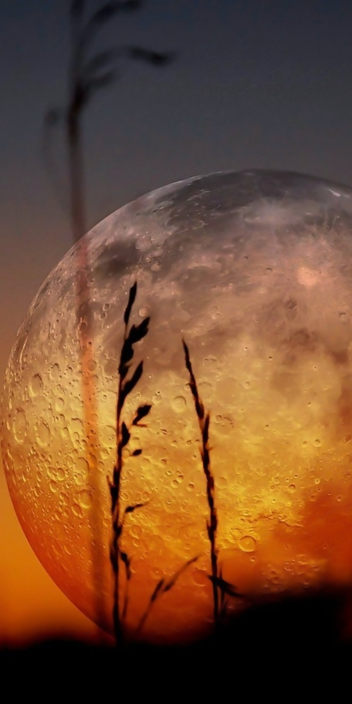 Moon Zoom Landscapes Plants Sunset 720x1440