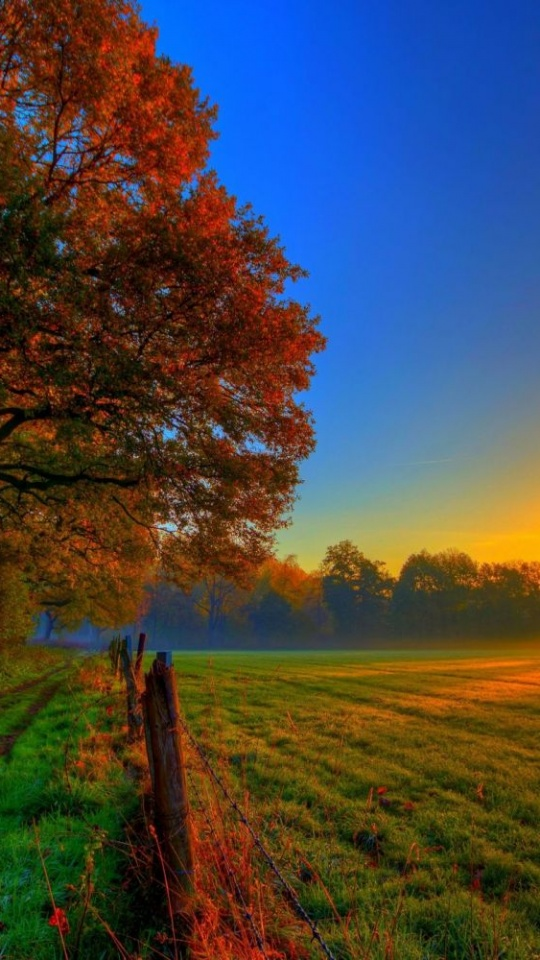 Nature Autumn Road Forest Colorful 540x960