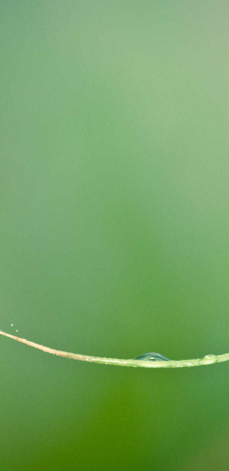 Nature Flower Garden Wild Drop 1080x2220 768x1579