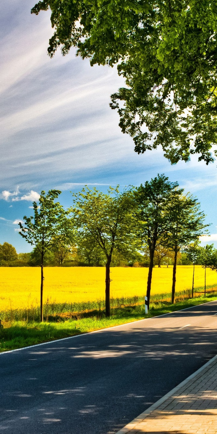 Nature Trees Streets Sunlight Roads Yellow Field 720x1440