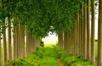 Roads Trail Landscapes Trees Leaves 540x960 340x220