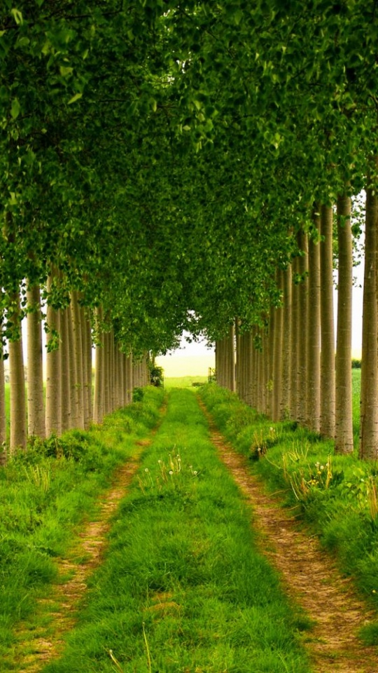 Roads Trail Landscapes Trees Leaves 540x960