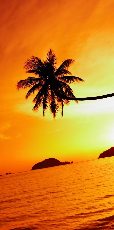 Thailand Beach Sea Sunset Sky Palm Tree 720x1440