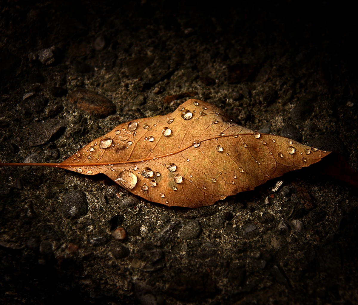 500px Photo ID: 83639037 - Raindrops on Brown Leaf