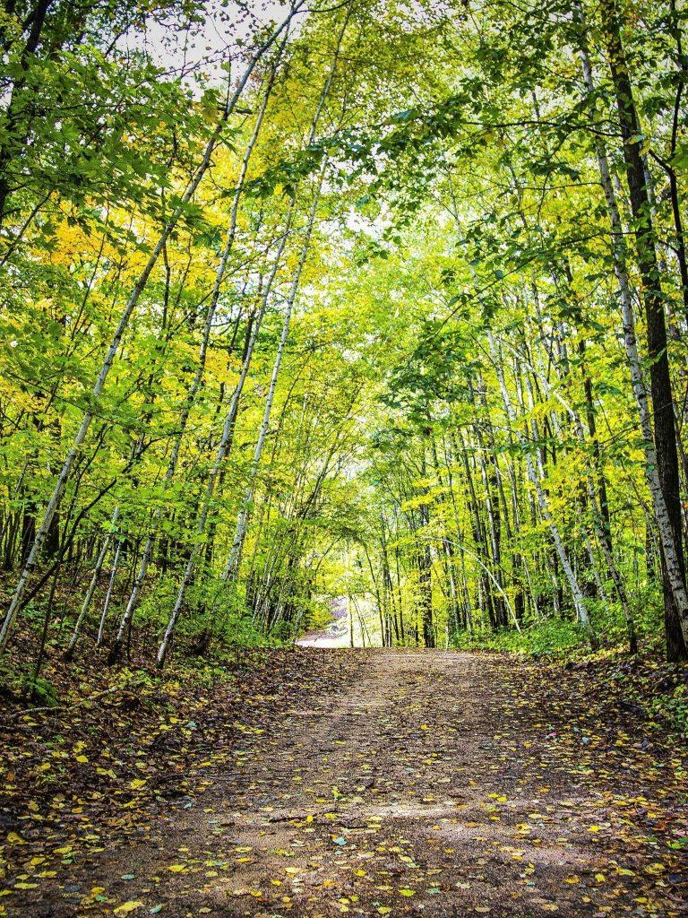 Autumn Forest Trees Road Landscape Wallpaper 1536x2048 768x1024