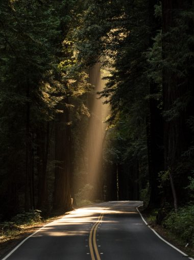 Conifer Daylight Evergreen Forest Highway Wallpaper 1536x2048 380x507